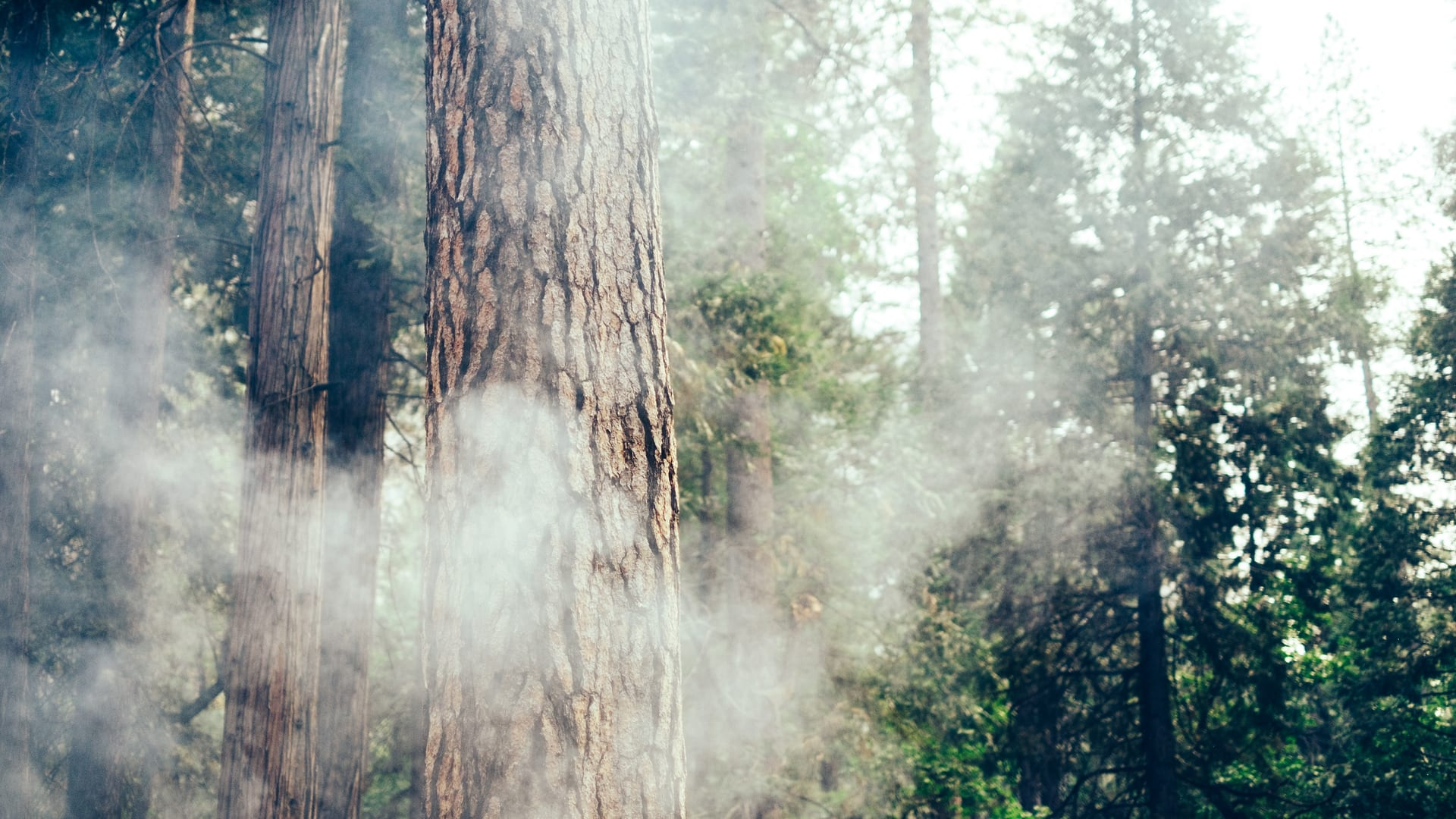How to Take a Safe and Responsible RV Trip During Wildfire Season